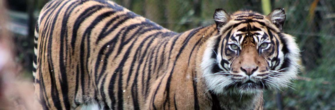 Chessington Zoo Reopens June 18th